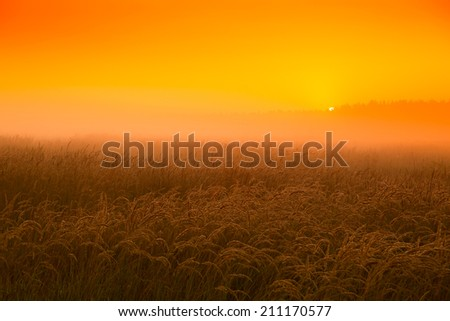 Honey sunset in the wheat field in August - stock photo