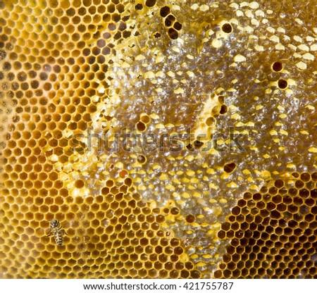 Honeycomb. - stock photo
