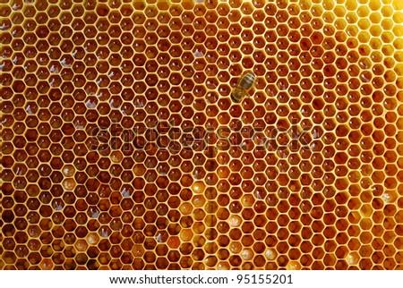 Honeycomb - stock photo