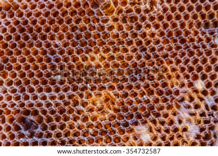Honeycomb background blurry - stock photo