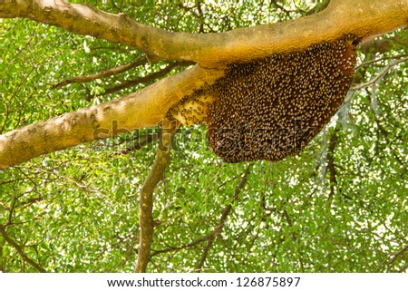 Honeycomb hanging on the tree - stock photo