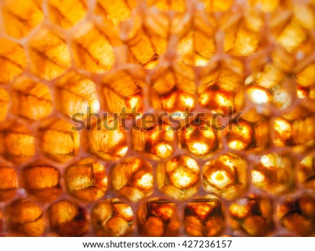 honeycomb in bright sunlight for background - stock photo