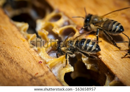 Honeycomb with bees - stock photo