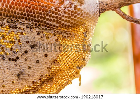 honeycomb with honey and young bee  nature background. - stock photo