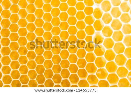 honeycombs unfinished - stock photo