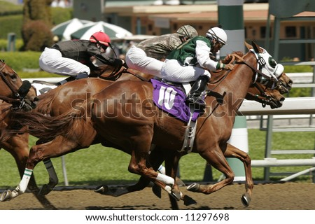 Hooves fly off the ground as jockeys race to the finish line in a thoroughbred horse race. - stock photo
