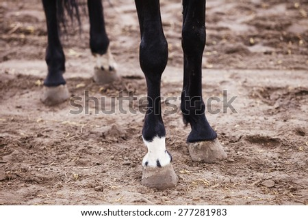 hooves of horses close - stock photo