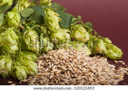 Hop cones and malt - stock photo
