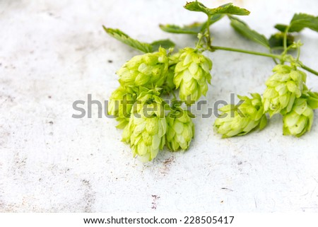 Hop cones on an old table - stock photo