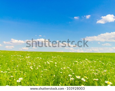 Horizon Blossoms Flowers bloom - stock photo