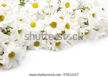 horizontal background with white chrysanthemums isolated on white - stock photo