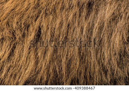 Horizontal close-up of camel hair, brown background with hairy texture, animal fur closeup - stock photo