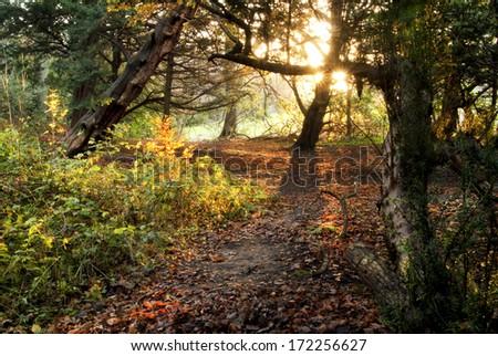 Horizontal colour image of surreall woodland  - stock photo