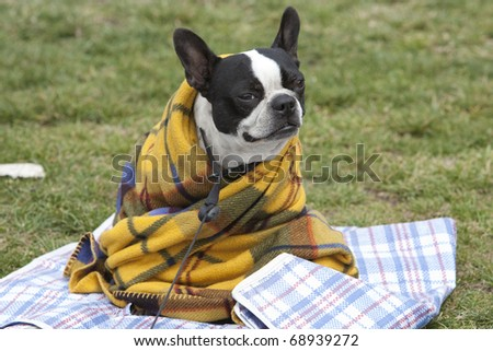 Horizontal image of a cute dog in a blanket - stock photo