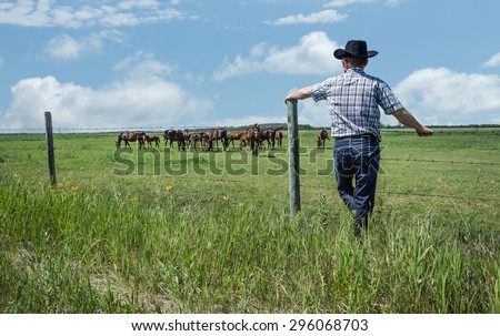 horizontal image of  cowboy wearing jeans and cowboy hat stands and leans against  fence in green grass and watches as his horses graze in pasture under  beautiful blue sky with clouds in summer time - stock photo