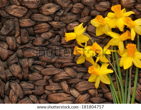 horizontal orientation close up of daffodils on a neutral, woven, textured surface with copy space on the left side / Bright Daffodils on Neutral Woven Background - stock photo