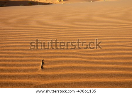 Horizontal pattern in the desert - stock photo