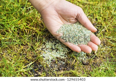 Horizontal position of Female hand holding new grass seed with bare earth soil and old grass beneath as background - stock photo