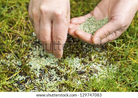 Horizontal position of Female hands holding new grass seed with bare earth soil and old grass beneath as background - stock photo