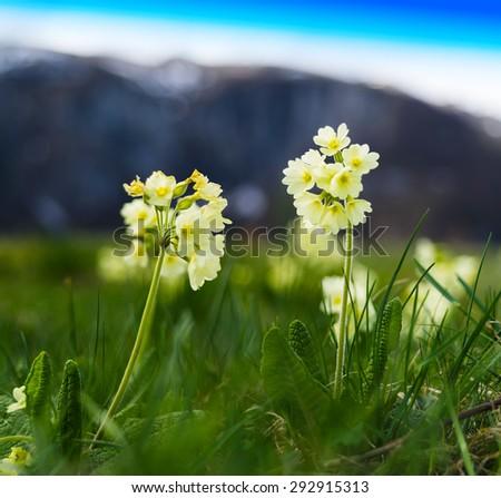 Horizontal vibrant mountain flowers bokeh background backdrop - stock photo