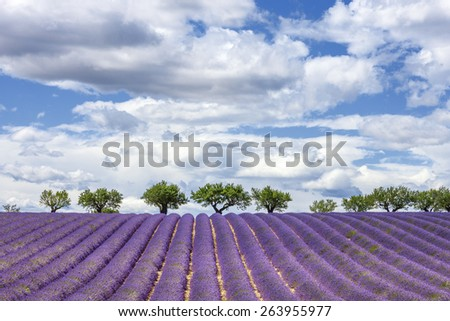 Horizontal view of lavender field, France, Europe - stock photo