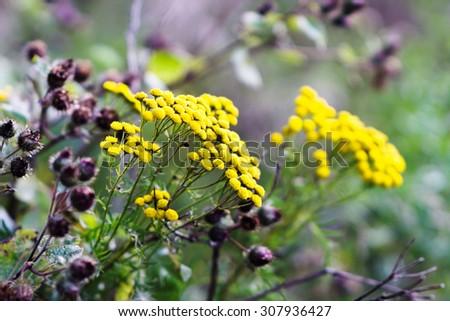 Horizontal vivid yellow flowers bokeh background - stock photo