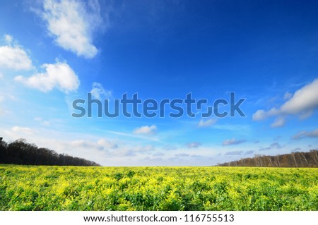 Horizontal Wide angle blue sky with flower meadow Yasnaya Polyana Lev Nikolayevich Tolstoy's home town, tula, russia. - stock photo