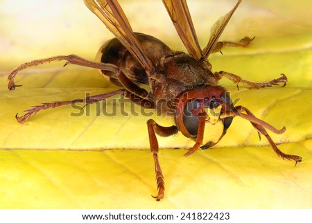 Hornet on a yellow background. Macro - stock photo