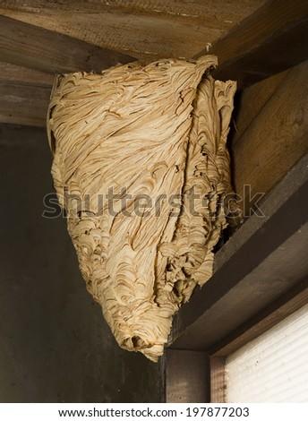 Hornet's nest on the roof garden house - stock photo