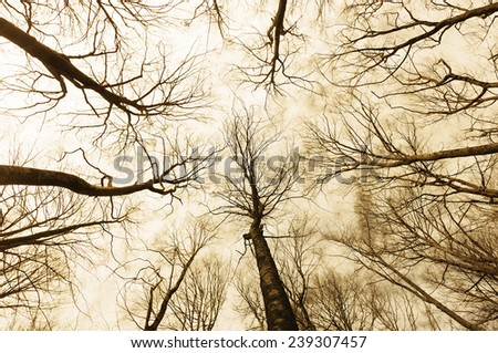 horror forest with a directly below perspective - stock photo