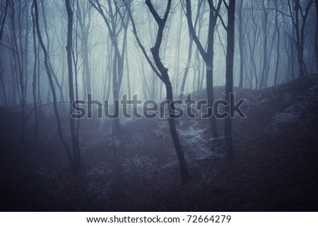horror scene of a dark forest with blach trees and blue fog - stock photo