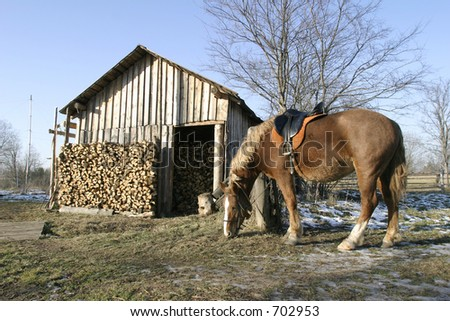 Horse about a rural house - stock photo