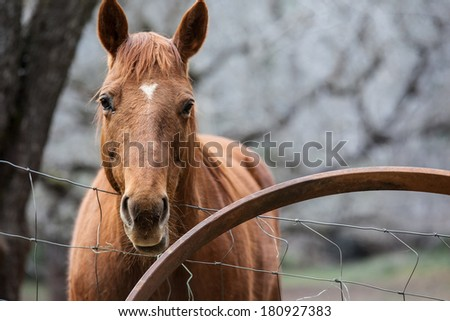 Horse alone by the fence  - stock photo