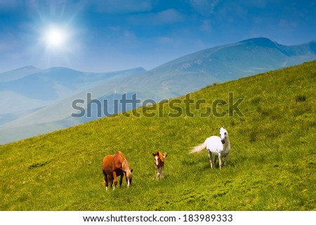 horse and a calf grazing on a green mountain meadow in the mountains against the blue sky with clouds and sunlight - stock photo