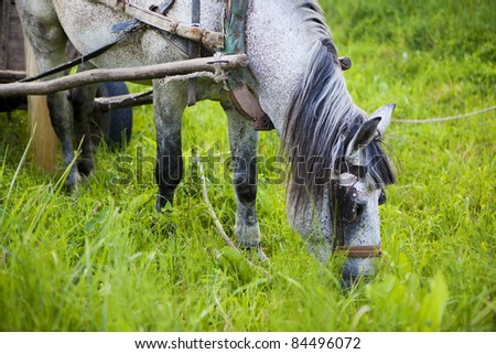 Horse and carriage on green background - stock photo