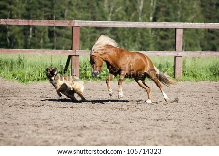 horse and dog play in the paddock - stock photo