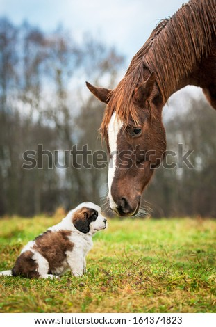 Horse and saint bernard puppy - stock photo