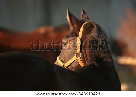 Horse at dusk, November, Poland. - stock photo