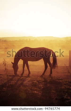 Horse at the sunset. Focus on horse silhouette. - stock photo