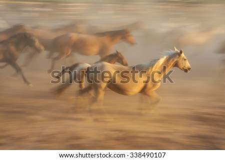 Horse baby and his mother in a fiery blurred motion. Flock is blurred in the background. - stock photo