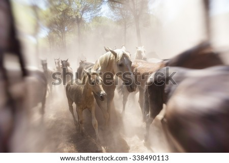 Horse baby and his mother in focus. Flock hurtles in the forest. - stock photo