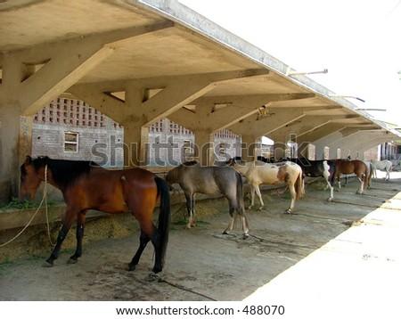Horse Barn - stock photo