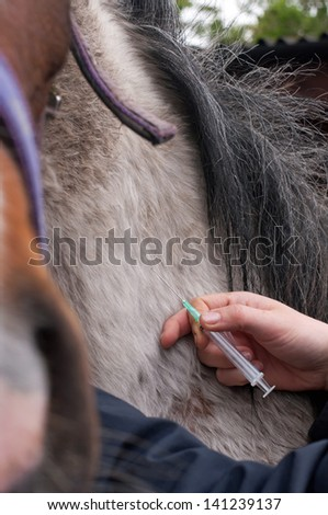 Horse being given an injection - stock photo