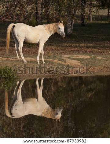 Horse by Pond - stock photo