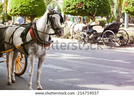 Horse carriage parked in andalusia, spain - stock photo