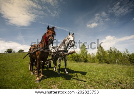 Horse carts in nature - stock photo
