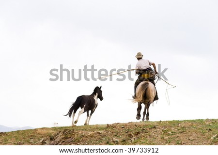 horse catching with a lasso in Mongolia - stock photo