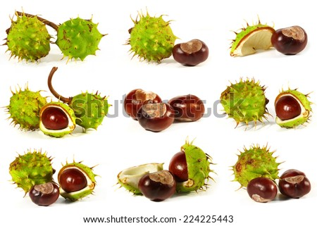 Horse-chestnut with crust on a white background. Collage - stock photo