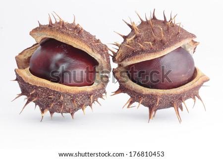 Horse  chestnuts pods over white - stock photo