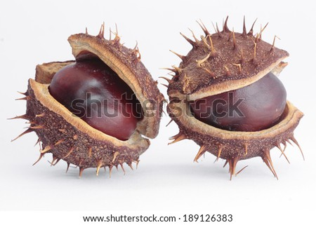Horse  chestnuts pods over white - stock photo